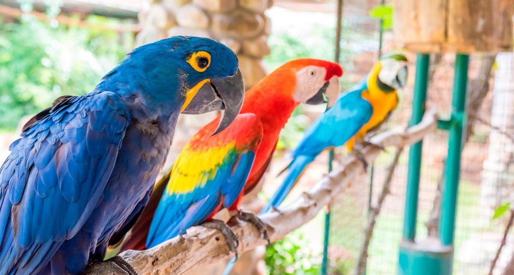 Mondiale-Ornitologia